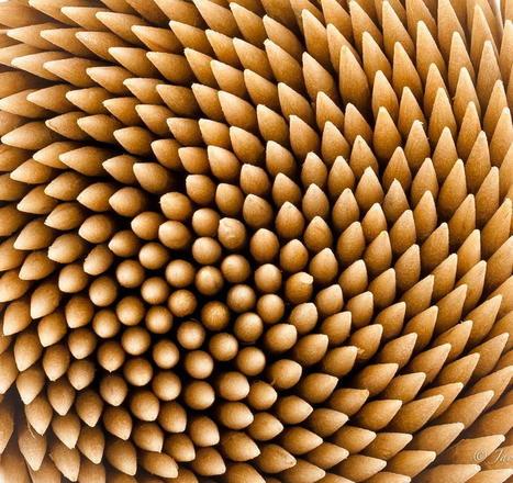 Toothpick | Great Photographs | Scoop.it