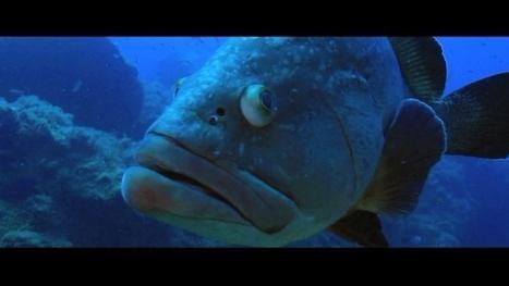 Vidéo Full HD | Voyage de plongée en Corse ! | Plongeurs.TV | Scoop.it