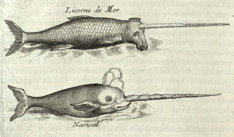 The Mystery of the Sea Unicorn – Phenomena: The Loom   All about water, the oceans, environmental issues   Scoop.it