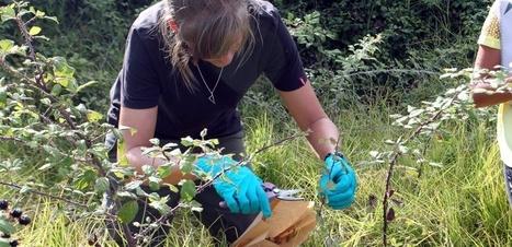 En France, la bactérie Xylella progresse   Les colocs du jardin   Scoop.it