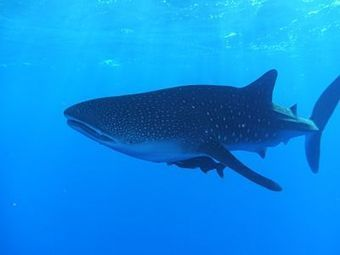 SCUBA Diving in Belize Overview | Belize in Social Media | Scoop.it