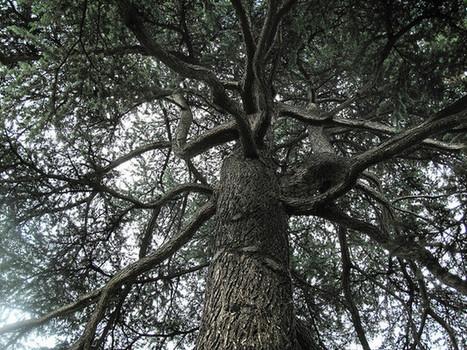 À Rouen, recréez votre arbre généalogique ! | Rhit Genealogie | Scoop.it