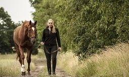 Beyond mindfulness: how horse riding, eating your greens and going for a walk can help depression   Empathy and Animals   Scoop.it