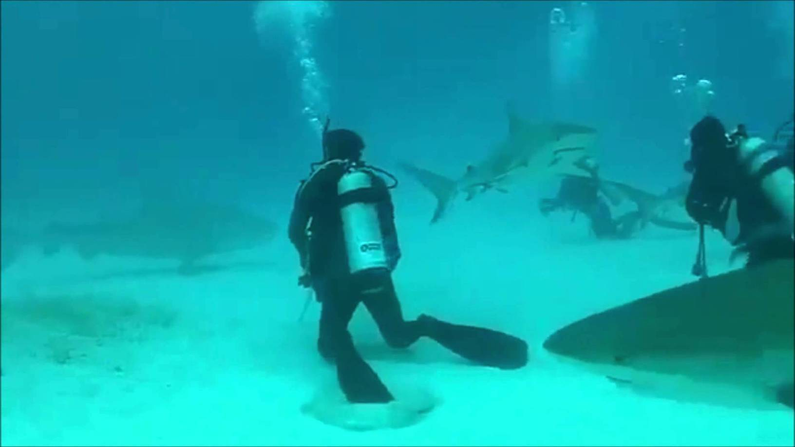 Shark Attack Scuba Diver Caught On Video Yout