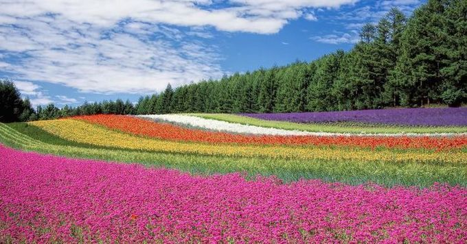 Farmers Are Using Flowers To Beat Back Pests Instead Of Chemicals