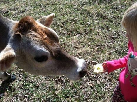 Does it Pay to Keep a Cow? - Chelsea Green | Local Food Systems | Scoop.it