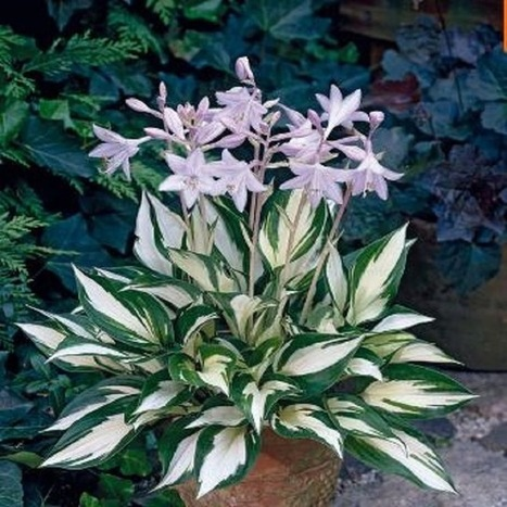 Flores De Sombra Aharon Appelfeld Pdf Download - Flores-de-sombra