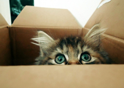 It's all about the box! | catnipoflife | Scoop.it