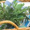 Plantes Rares et Insolites