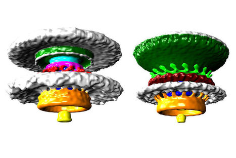 Bacteria Have 'Biological Wheels' That We Can Finally See In 3D | Biomimicry | Scoop.it