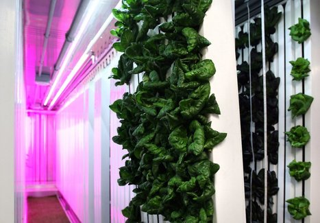Elon Musk's brother is building vertical farms in shipping containers | Univers(al)ités | Scoop.it