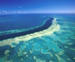 #UNESCO to place #GreatBarrier in #highRisk list unless #Australia steps up #protection efforts? | Rescue our Ocean's & it's species from Man's Pollution! | Scoop.it