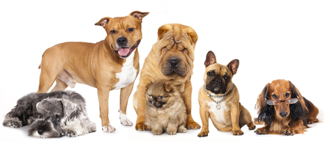 Dog Nutrition 101 | Look Great Naked... | Scoop.it