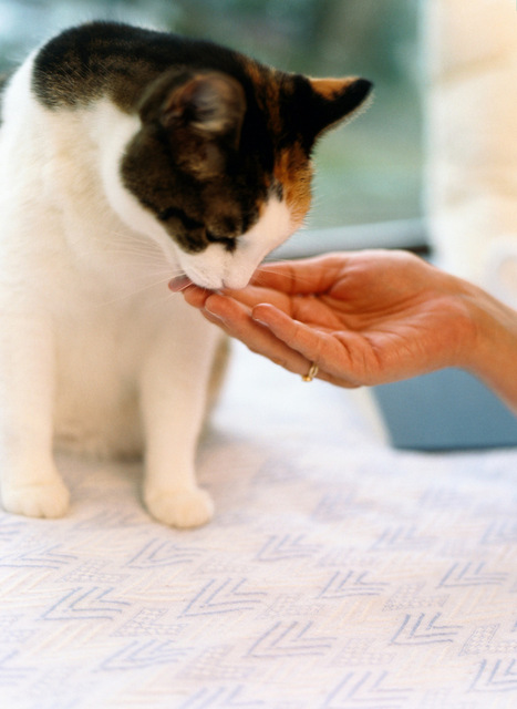 AVMA Pod Casts | Creating a cat-friendly home | In Your Pet's Best Interest | Scoop.it