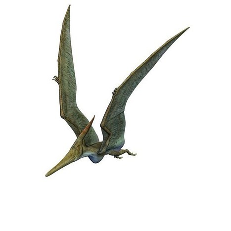 Ancient flying pterosaurs mapped on Google Earth | Geology | Scoop.it