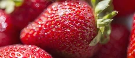 Les fraises françaises et espagnoles malades de leurs pesticides | Veille développement durable | Scoop.it