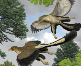 Birds Descended from Gliding Dinosaurs : Discovery News | Palaeontology News | Scoop.it