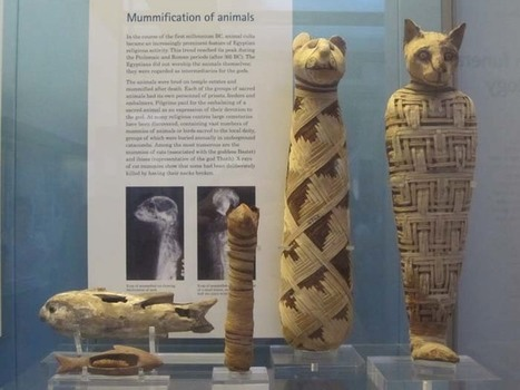 Ancient Egyptian Animals | SBS Ancient Egypt | Scoop.it