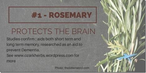 The Rosemary Series - #1 Memory | Plantsheal | Scoop.it