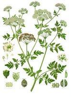 The History of, and Contemporary Advances in, Botany, Herbal and Alternative Medicine | Herbaria | Scoop.it