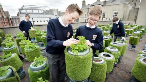 Belvedere College uses its rooftop to start an urban farm | Engineering | Scoop.it