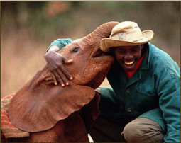 The David Sheldrick Wildlife Trust: A Haven for Elephants and Rhinos | Help save our Rhinos | Scoop.it