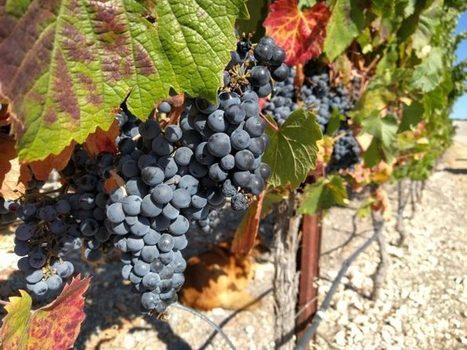 Paso Robles: Sorry, not sorry | Wine website, Wine magazine...What's Hot Today on Wine Blogs? | Scoop.it