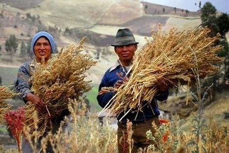 Le quinoa, mère de tous les grains - Observatoire des aliments | Alimentation et Santé, Trust on Science ! | Scoop.it