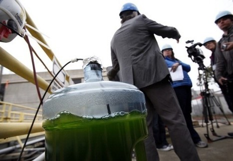 Marine Microalgae: Food and Fuel of the Future | Aquaponics~Aquaculture~Fish~Food | Scoop.it