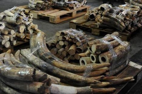 Kenya: une famille de 11 éléphants massacrée par des braconniers | Sauvegarde et Protection des animaux | Scoop.it