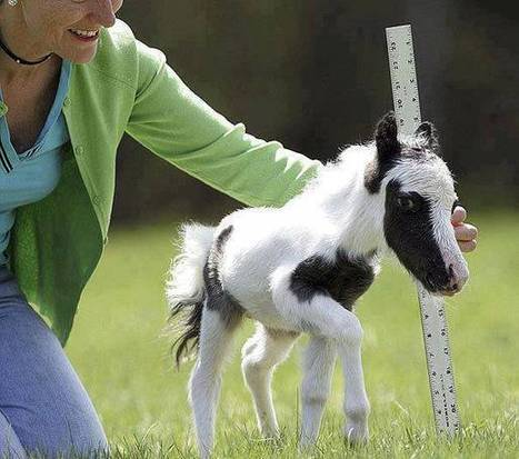 Meet Einstein the world's tiniest foal | Equestrian Vacations | Scoop.it
