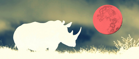 Full Moon Villains and Heroes Race for South Africa's Rhino and People | Rhino poaching | Scoop.it