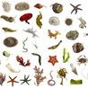 Marine Biology - CAC Biology Year 11