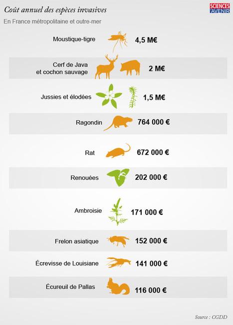 12 espèces invasives qui coûtent (très) cher à la France | Environnement et développement durable, mode de vie soutenable | Scoop.it