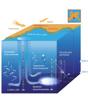 Bioluminescence et mouvement de masses d'eau en Méditerranée | Totalmente Natura | Scoop.it