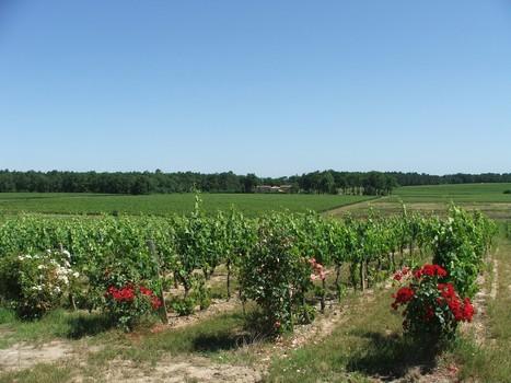 Les Grands Vins de Bordeaux - Les vins bio sont-ils de meilleure qualité ? | Revue de presse Pays Médoc | Scoop.it
