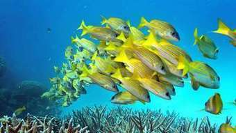 Coral reefs may be more adaptive to climate change than once thought   Ocean News   Scoop.it