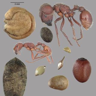 Casse-graine | EntomoNews | Scoop.it