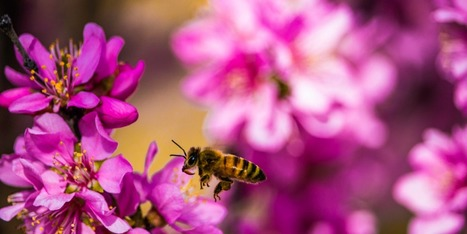 Droughts mean fewer flowers for bees   News fro