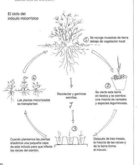 Las Micorrizas, los biofertilizadores naturales del suelo | ECOagricultor | Permacultura y autosuficiencia | Scoop.it