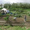 Design de permaculture