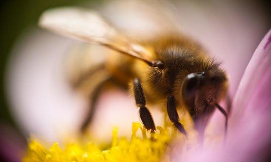 Comment Paris veut protéger les abeilles