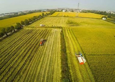 'Smart agriculture' changing lives of China's farmers | Big Data - let your data grow | Scoop.it