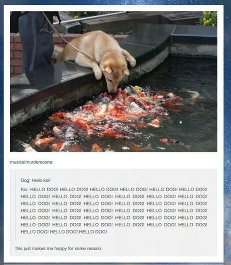 These fish aren't being very Koi.   Koi keeper   Scoop.it