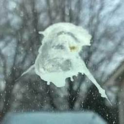 Behold! Jesus has revealed himself in bird poop, Ohio man says | It's Show Prep for Radio | Scoop.it