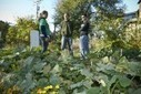 Detroit's Urban Agriculture Movement Could Help 'Green' the City | Urban rurality | Scoop.it
