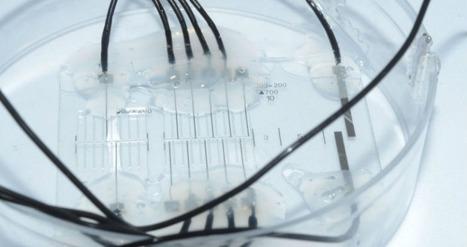 4422053830 Nerve-on-a-Chip Platform Makes Neuroprosthetics More Effective