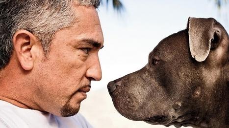 How Dog Whisperer Cesar Millan Learned New Tricks for His Website - Entrepreneur   #KESocial   Scoop.it