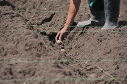 Agricultura hidrológica, una opción frente al cambio climático: Colombia | Agroindustria Sostenible | Scoop.it