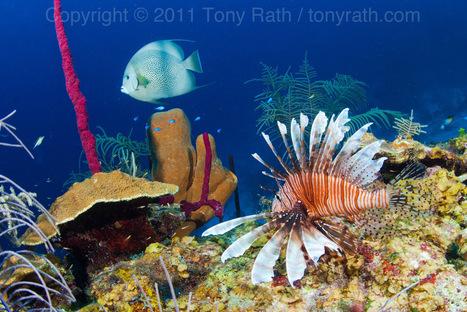 Information for new SCUBA divers visiting Belize | Belize in Social Media | Scoop.it